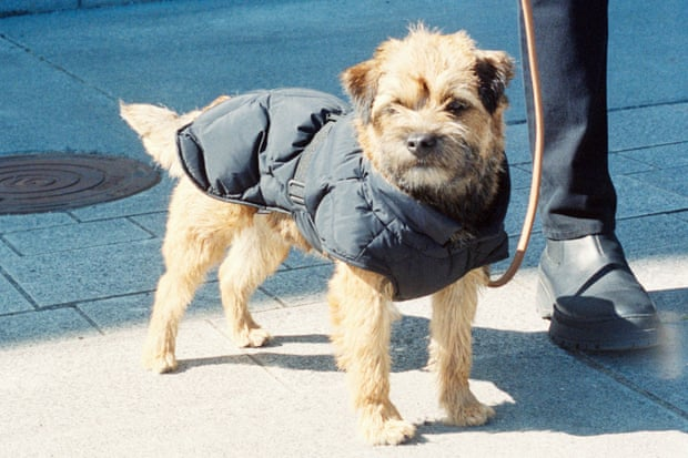How much is that doggie coat in the window The rise of pet fashion